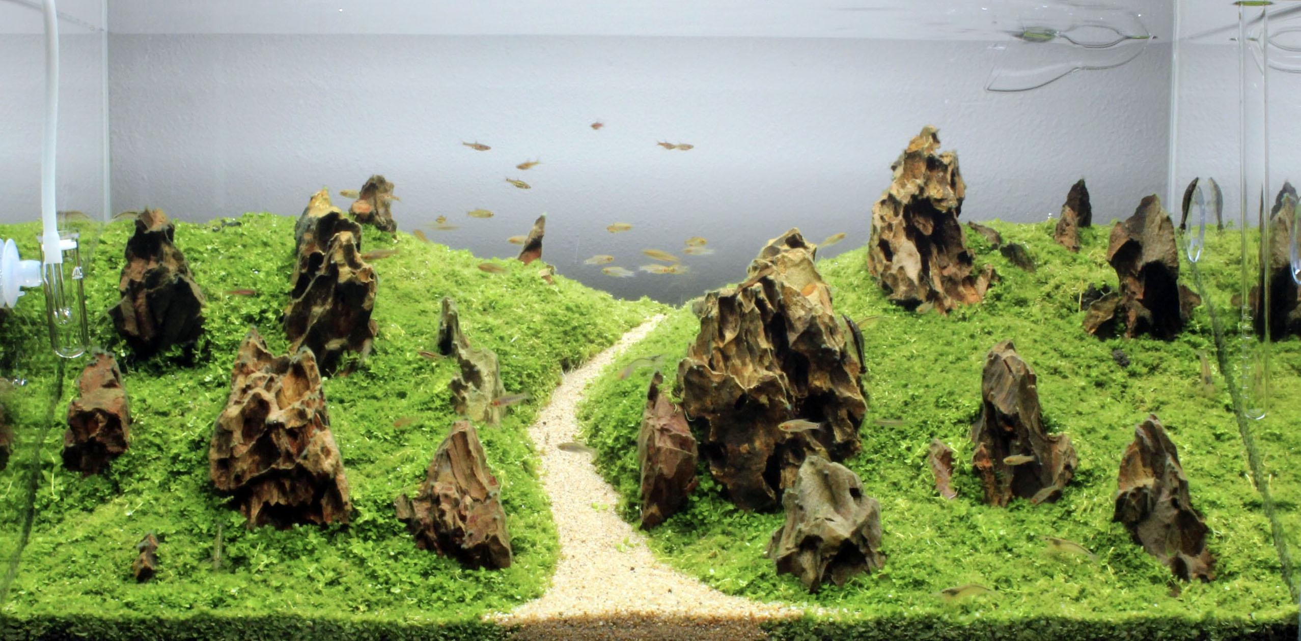 Aquascape 1 Iwagumi Online Aquaria