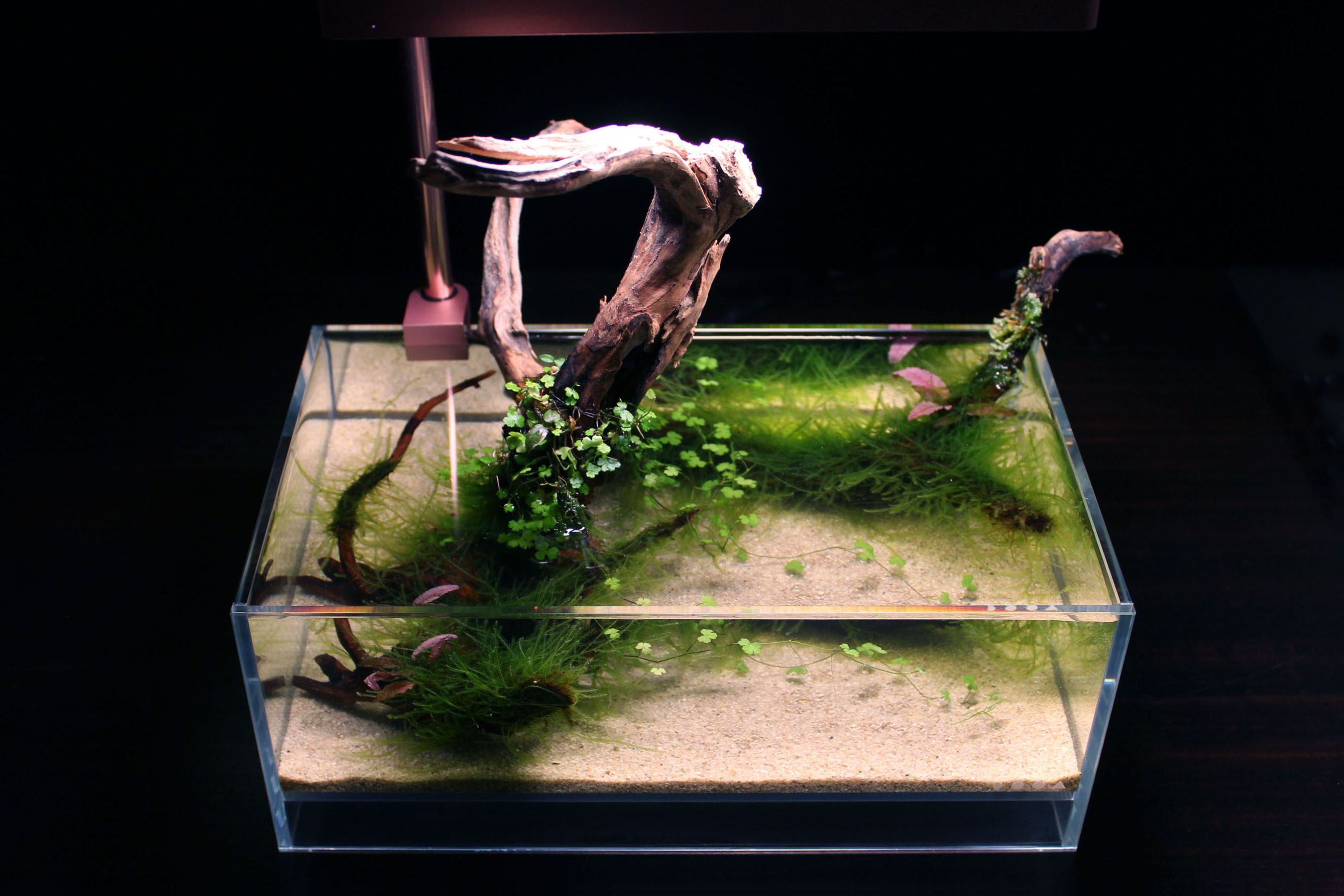 Wabi-kusa – Arranging Driftwood