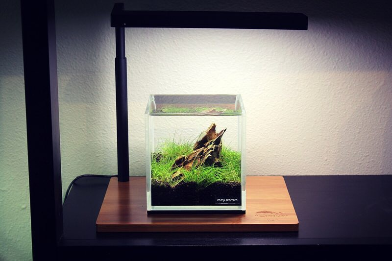 ONF FLAT NANO STAND Limited Edition