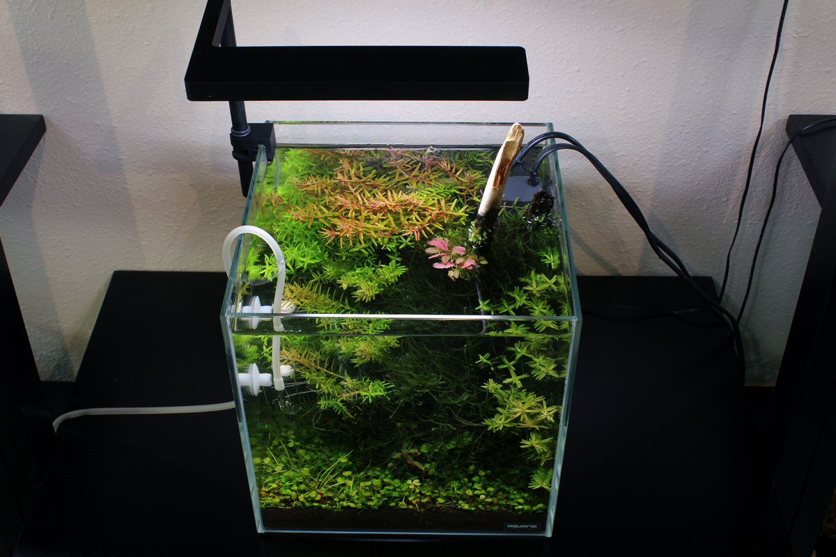 Inspiration#5-25Cube Aquascape