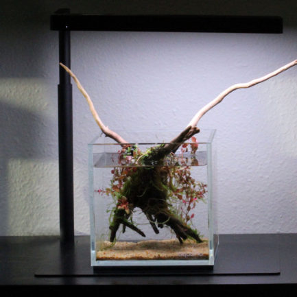 12cm Cube Wabi-kusa