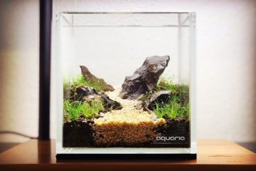 Inspiration#6 - 12cm Cube Aquascape
