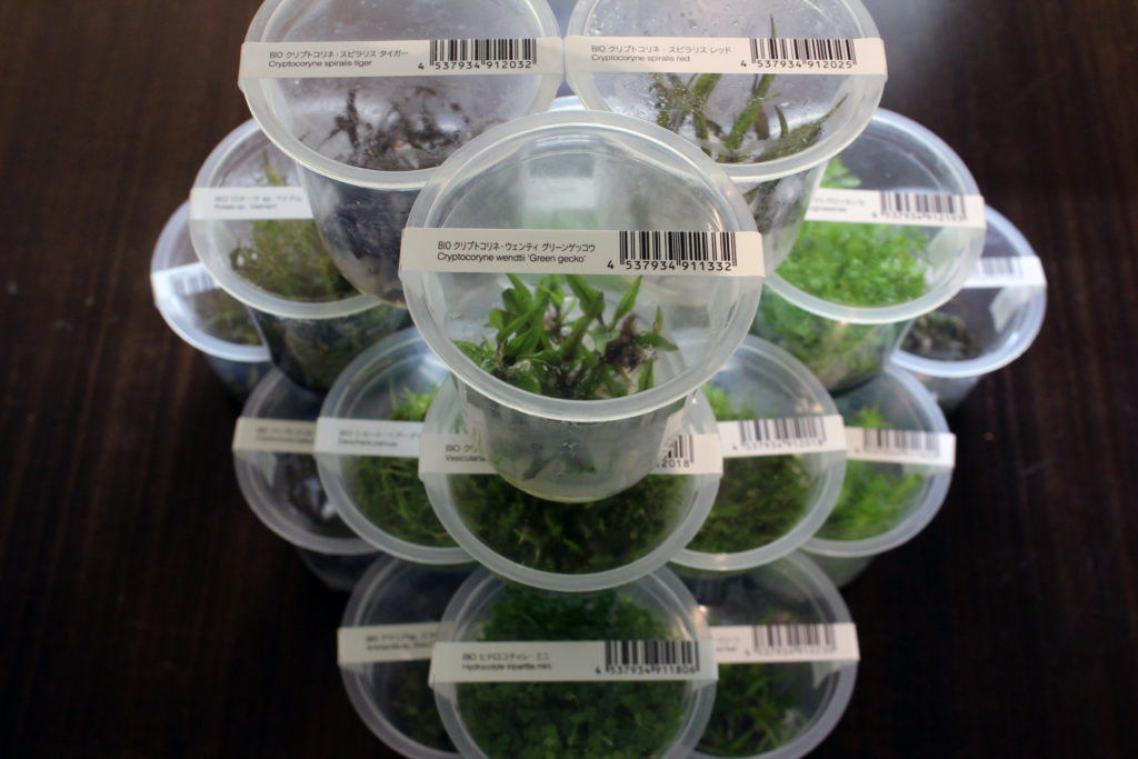 ADA Tissue Culture Plants
