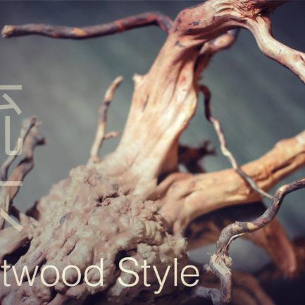 Aquascape Workshop – Driftwood Style