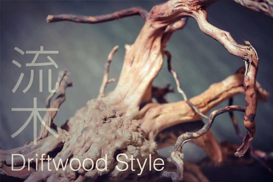 Aquascape Workshop – Driftwood Style