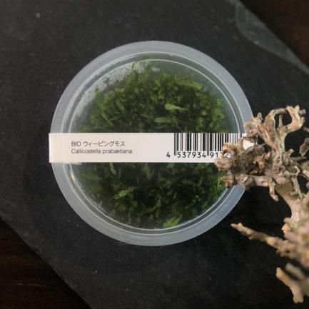 Weeping Moss - Vesicularia Ferreri 'Weeping'