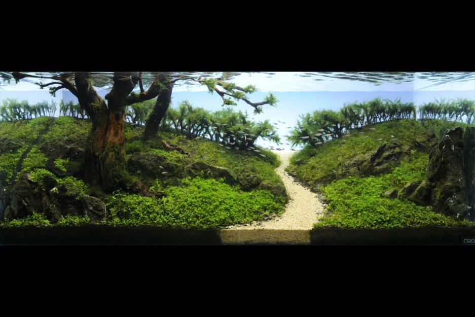 ADA Aqua Gravel IAPLC2014 A Road to Paradise