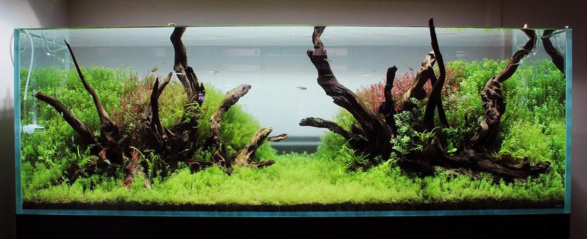 Aquascape #10 180P Driftwood Style Nature Aquarium